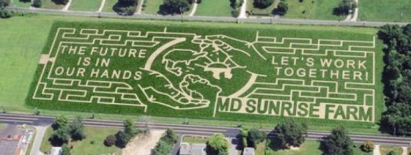 The 2008 Corn Maze Design