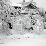 Feb Snow (5)