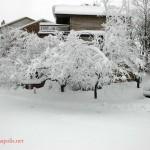 Feb Snow (6)