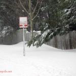 Feb Snow (9)