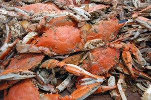 That's a lot of crabs! Rotary announces grants.