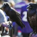 Ravens2013_001