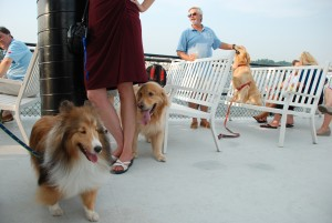 SPCA Dog Days Cruise_001