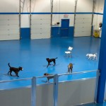 Tecla K-9 Academy to hold grand opening