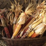 Homestead Gardens Fall Festival is around the corner