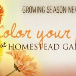30th Annual Homestead Gardens Fall Festival opens September 28