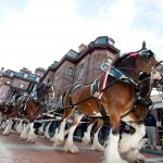 Military Bowl Parade details released–Katcef Brothers and Budweiser bringing back Clydesdales