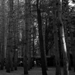 Electric-Forest-2015-032