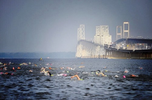 Swimming in the Chesapeake Bay: What are the Risks?