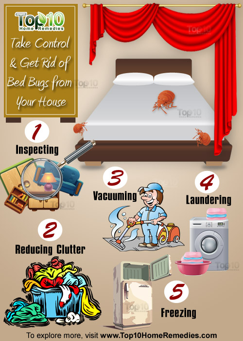 Washing Linens Get Rid Of Bed Bugs
