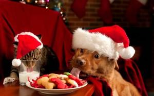 Christmas-Cat-Dog-eating1