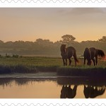 "Maryland's Assateague Island National Seashore to be featured on ""Forever Stamp"""