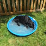 K9 Spice cools off at home