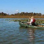Jug Bay by canoe