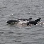 Help a Scientist: see a dolphin in the Bay? Report it online!