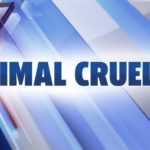 Glen Burnie couple charged with 80 counts of animal cruelty