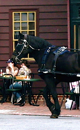 Annapolis Carriage