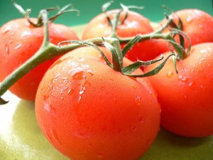 Tomatomania at Greenstreet Gardens (April 26-27, 2014)