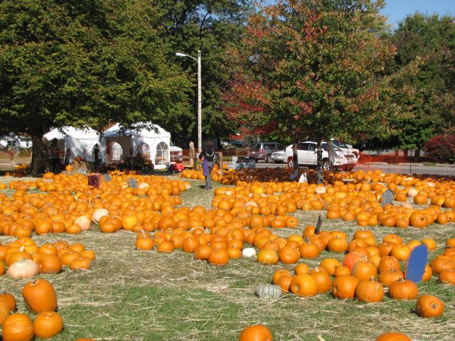 St. Martin's Pumpkin Patch
