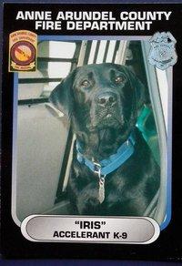 Iris Anne Arundel K-9 Fire Dog