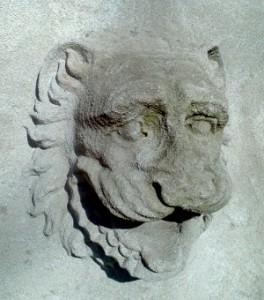 lion72