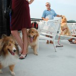 Summer cruise for your canine on the Harbor Queen