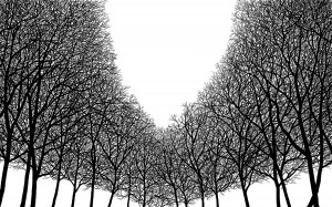 Alex Porter, _Lifeless Dominion Opens_, Ink on Bristol for Art of the Forest at West Annapolis Artworks