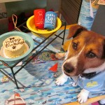 Paws Pet Boutique celebrating 16 years