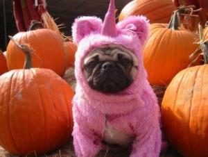 dog-halloween-costume11-399x300