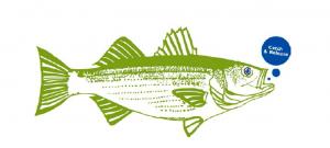 Boatyard Rockfish