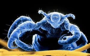 evolve medical clinics urgent care super lice outbreak in maryland