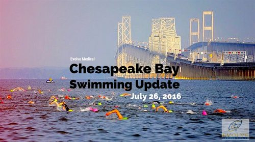 Chesapeake Bay Swimming