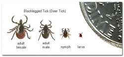 Maryland's tick problem: prevent Lyme disease from Evolve Medical provides primary care and urgent care to Annapolis, Edgewater, Severna Park, Arnold, Davidsonville, Gambrills, Crofton, Waugh Chapel, Stevensville, Pasadena and Glen Burnie.