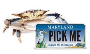 Chesapeake Bay Trust awards more than $3.7 million in grants to kick off 2018